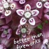 Better Than Fireworks