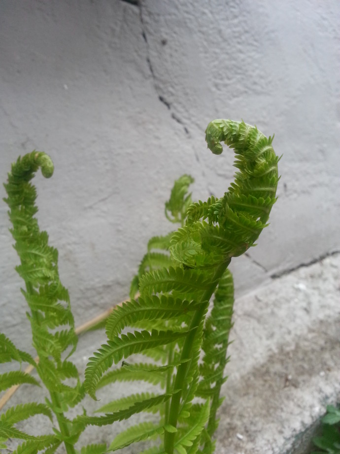 """""""Instructions for living a life. Pay attention. Be astonished. Tell about it."""" ― Mary Oliver (fern photograph by Jenny Hoople)"""