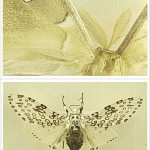 Free printable moth notecards, click through to download