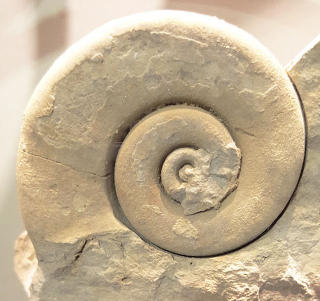 The beautiful variety in fossil snail shells - art inspiration at the natural history museum, click through for more pictures!