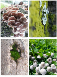 Free Printable moss, fungi and lichen postcards by Jenny Hoople of Authentic Arts