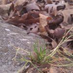Wabi sabi fall, some Monday nature inspiration from Jenny Hoople.