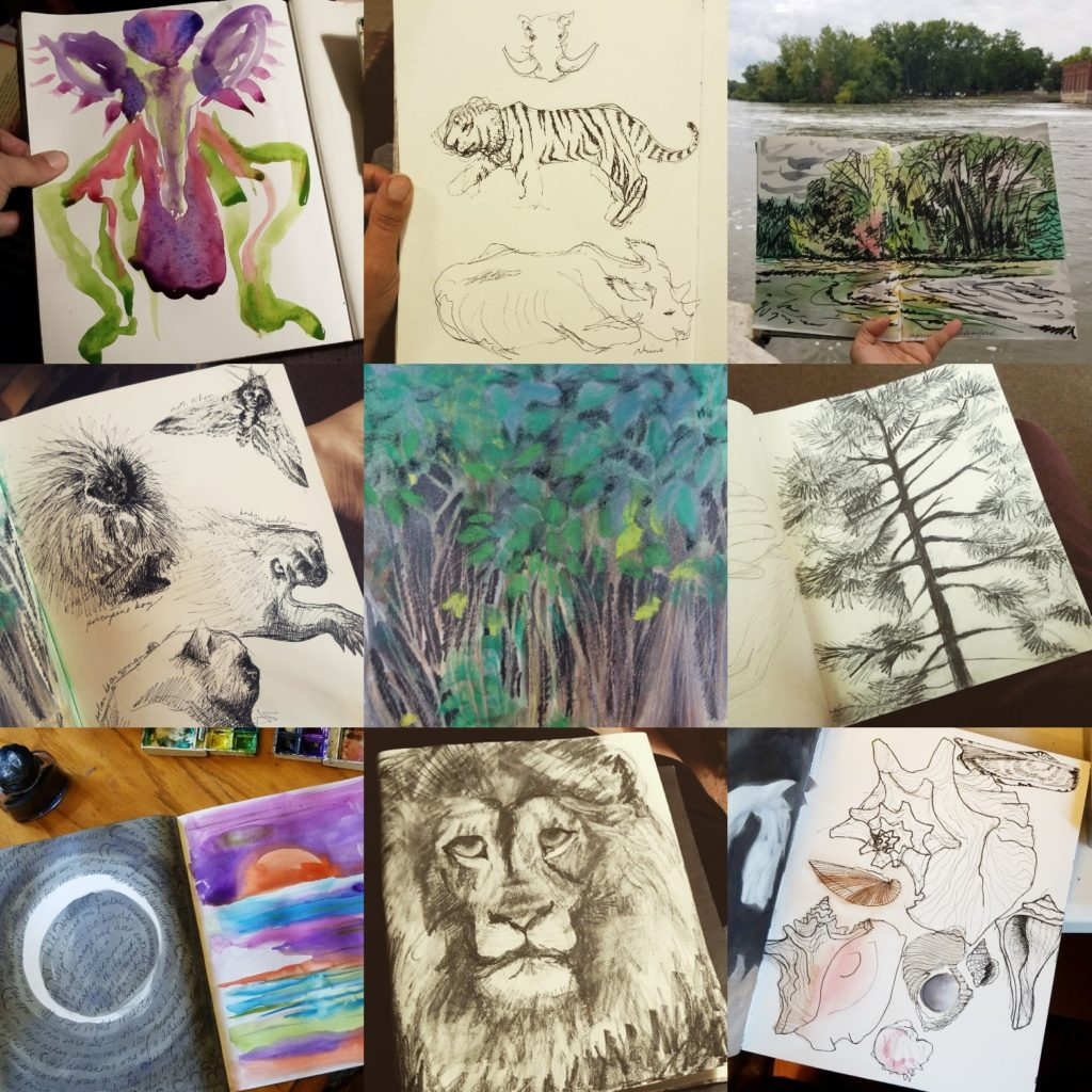 Sketches of Nature by Jenny Hoople of Authentic Arts