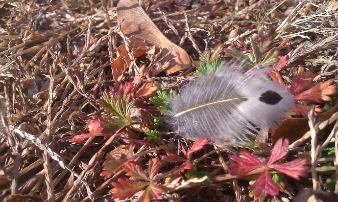 Little feather on fall foliage, Beloit, Wisconsin.