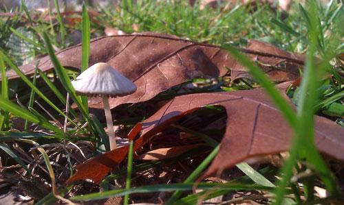Little mushroom cap :)