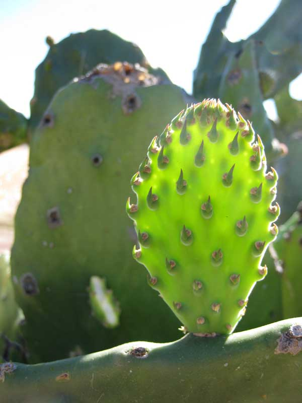 The Beauty of Cactus - Nature Photographs in Mexico